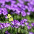 In den Frühling