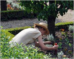 In den Gärten von Villandry IX