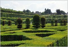 In den Gärten von Villandry VI
