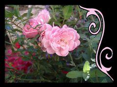 In den Garten geguckt!
