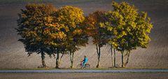 In den Herbst radeln . . .