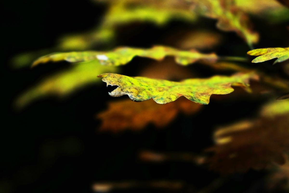 in den Herbst tauchen