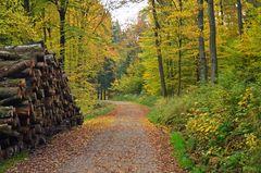 In den herbstlichen Wäldern der Eifel........