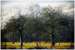 In den Obstbäumen...