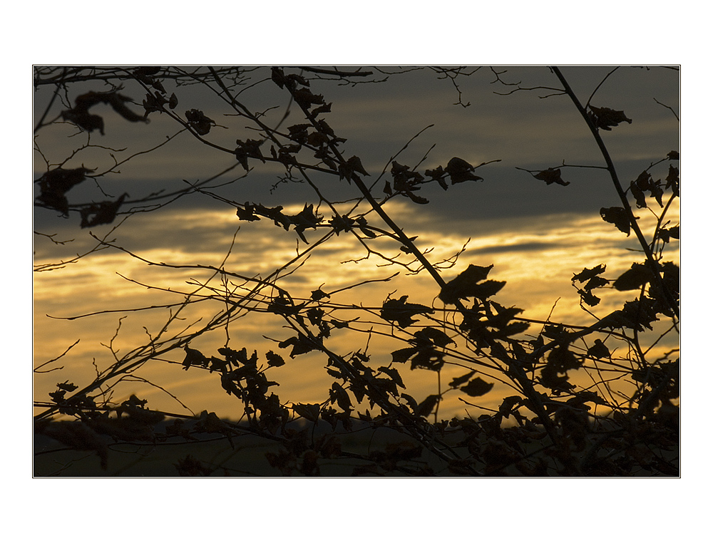 ...in den ohren der erinnerung... - ...ffffegt der wind, später herbstwind... - (mit Lyrik)