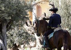 In den Oliven