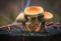 In den Pilzen