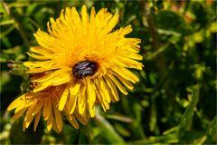 In den Pollen versunken