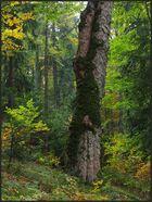 In den polnischen Beskiden - Gorce (1)