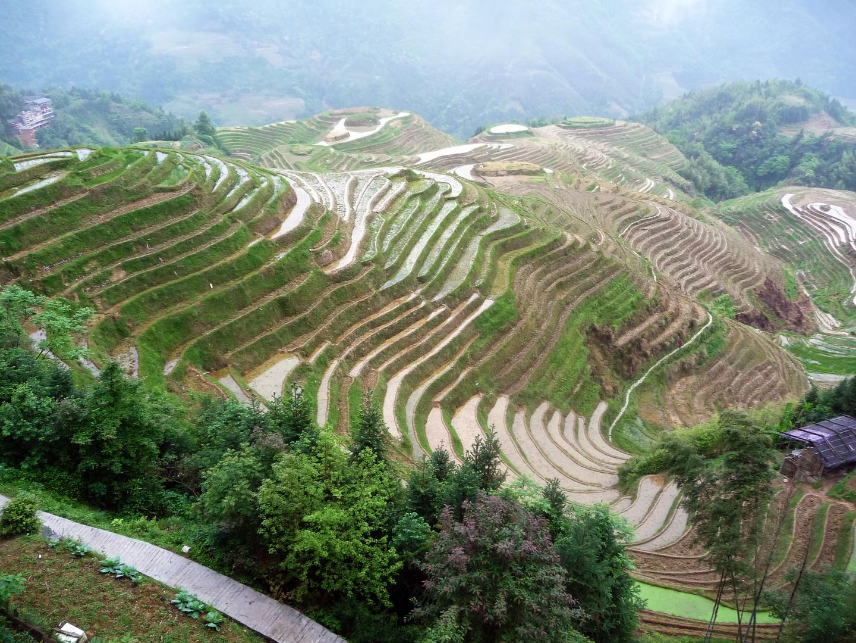 In den Reisterrassen von Longsheng (China)