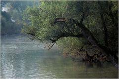 in den Rheinauen