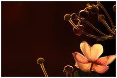 In den Schoß der Blüte...
