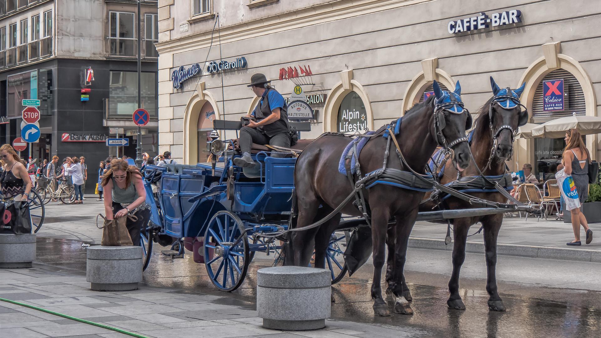 In den Straßen von Wien (431)