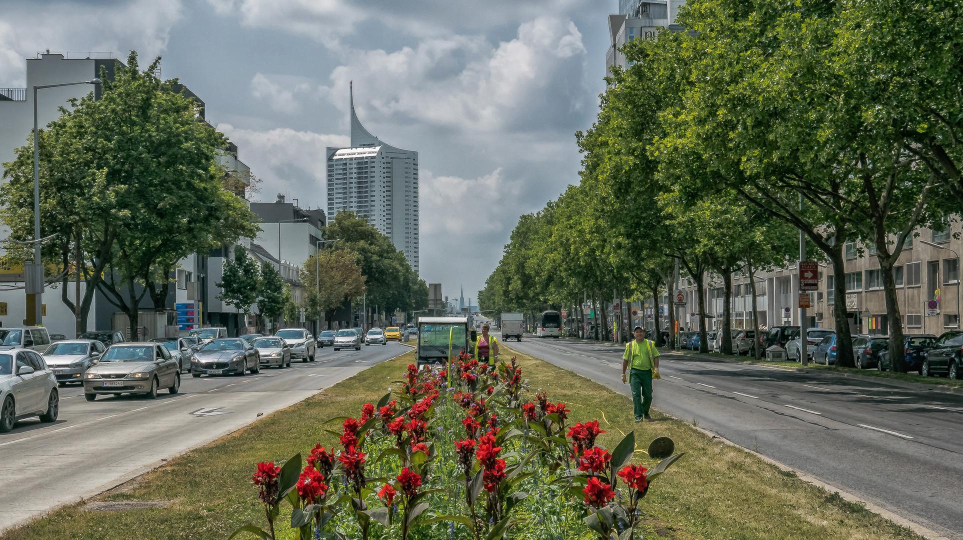 In den Straßen von Wien (432)
