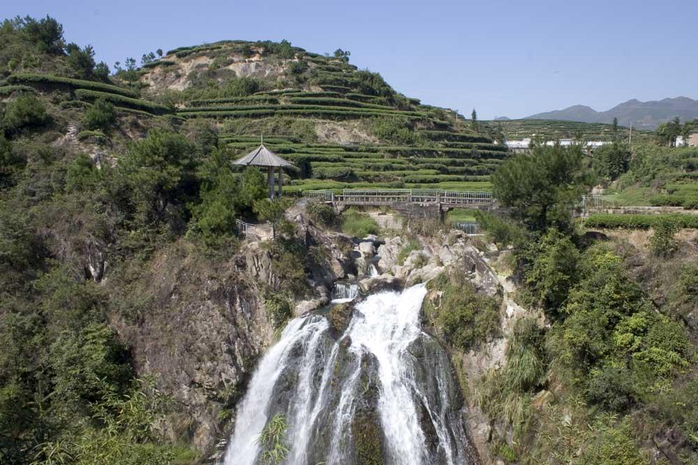 In den Tee Plantagen von Fujian