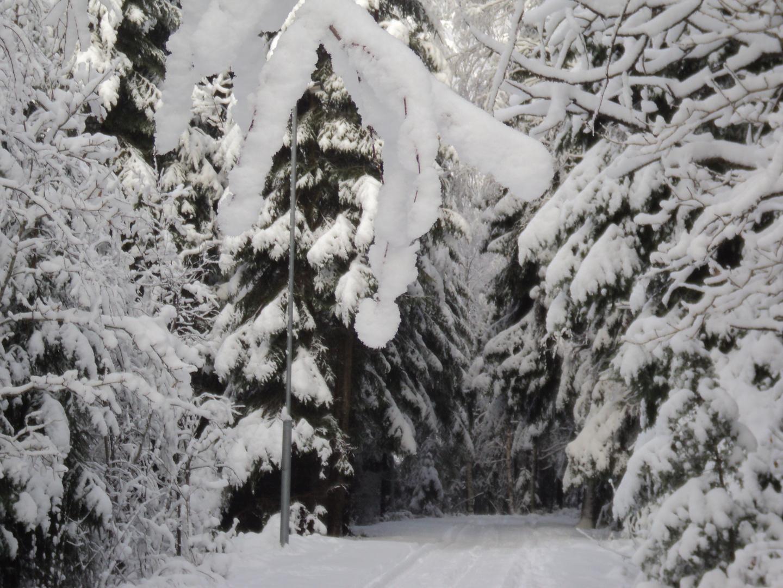 ...in den tiefen Wald