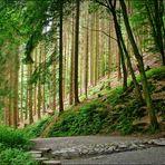 In den Wäldern an der Wupper