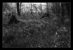 - in den Wald schauen -