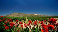 In den Winelands von SA