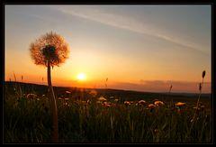 In der Abendsonne leuchten