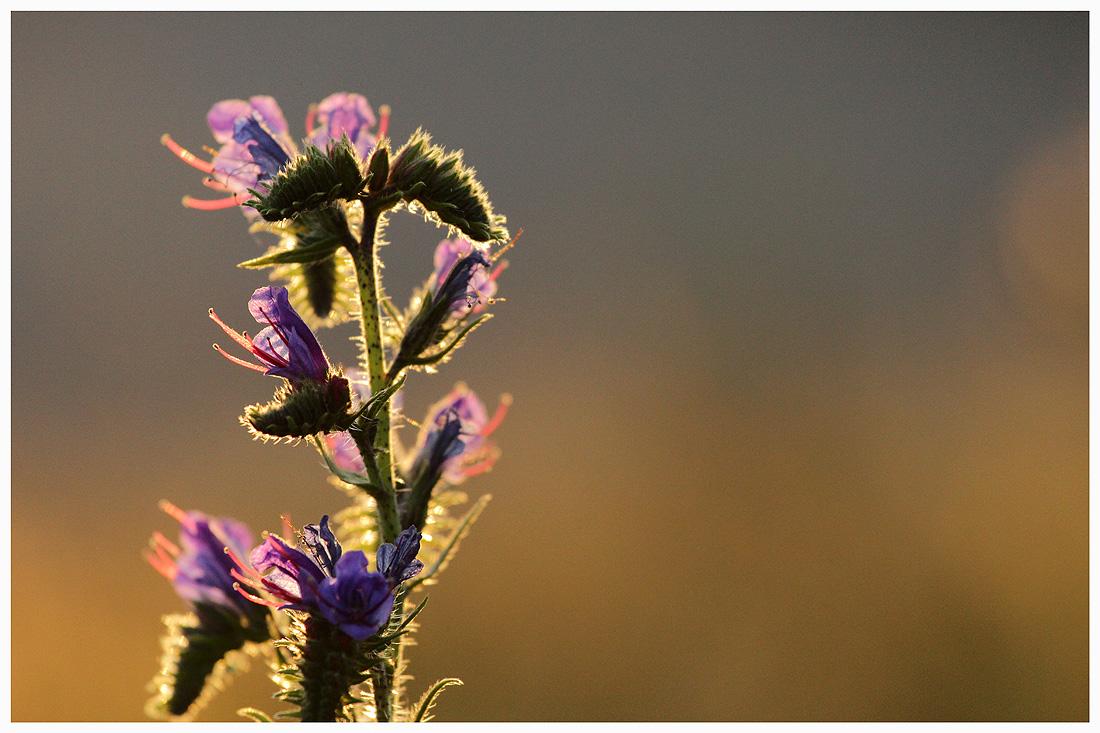 In der Abendsonne wächst die Sehnsucht...