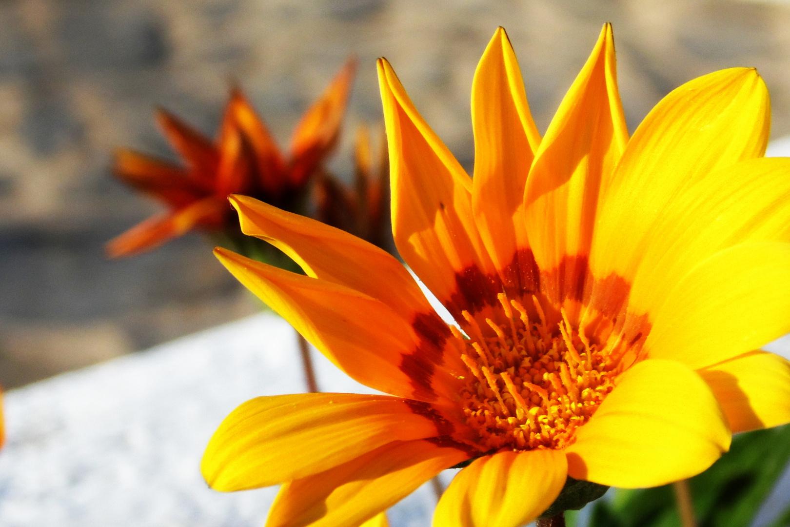 In der Blüte der ...