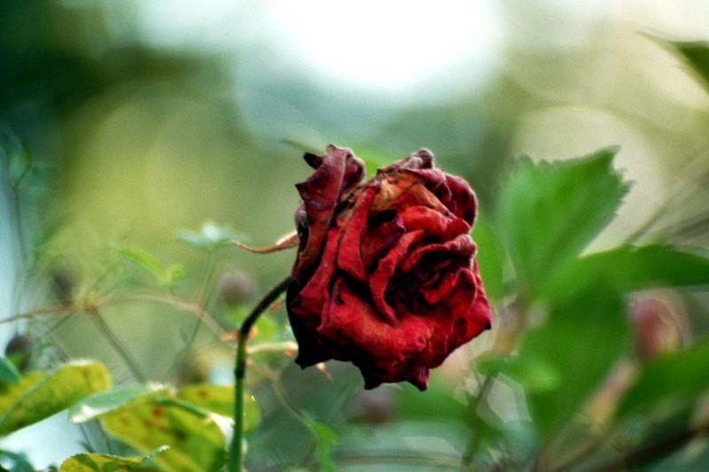 In Der Blüte Ihres Lebens