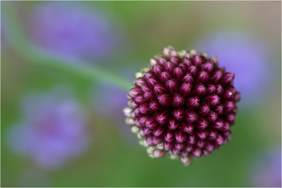 ... in der Botanik ...