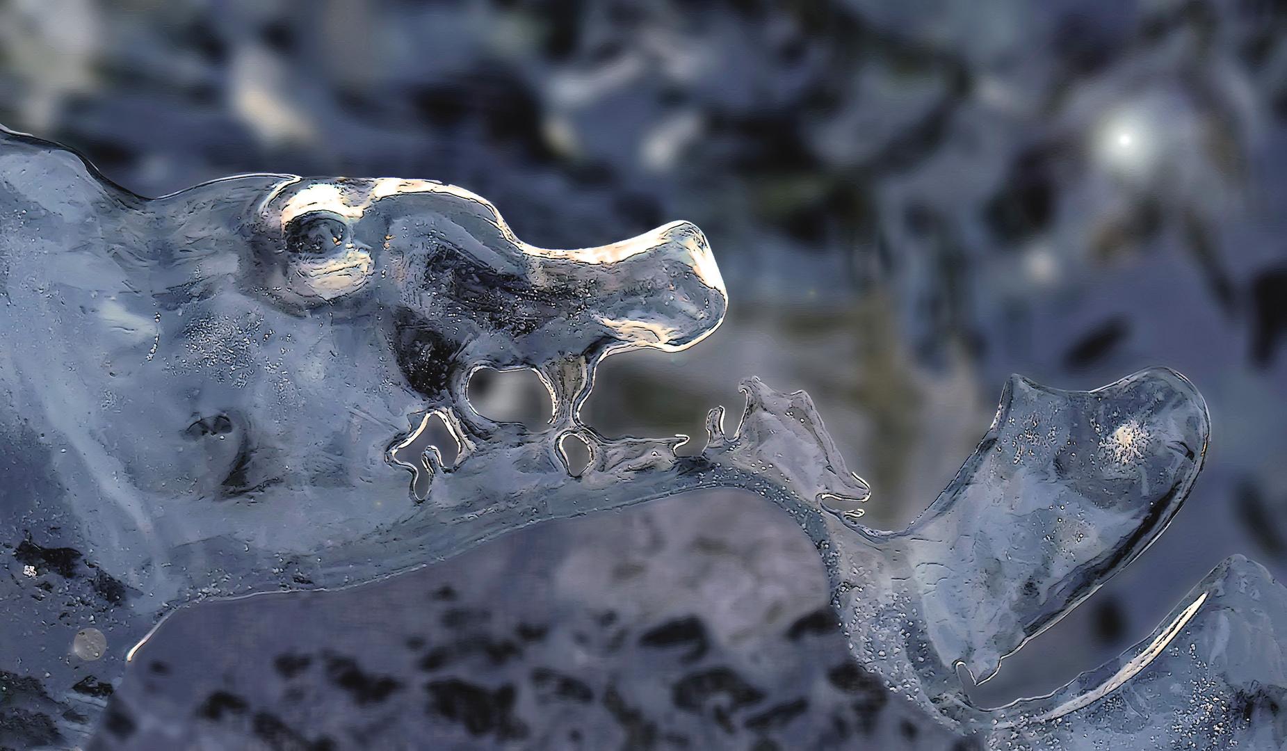 In der Eis-Tierwelt sind unzählige Tierarten vertreten! - Des habitants du monde glacial...