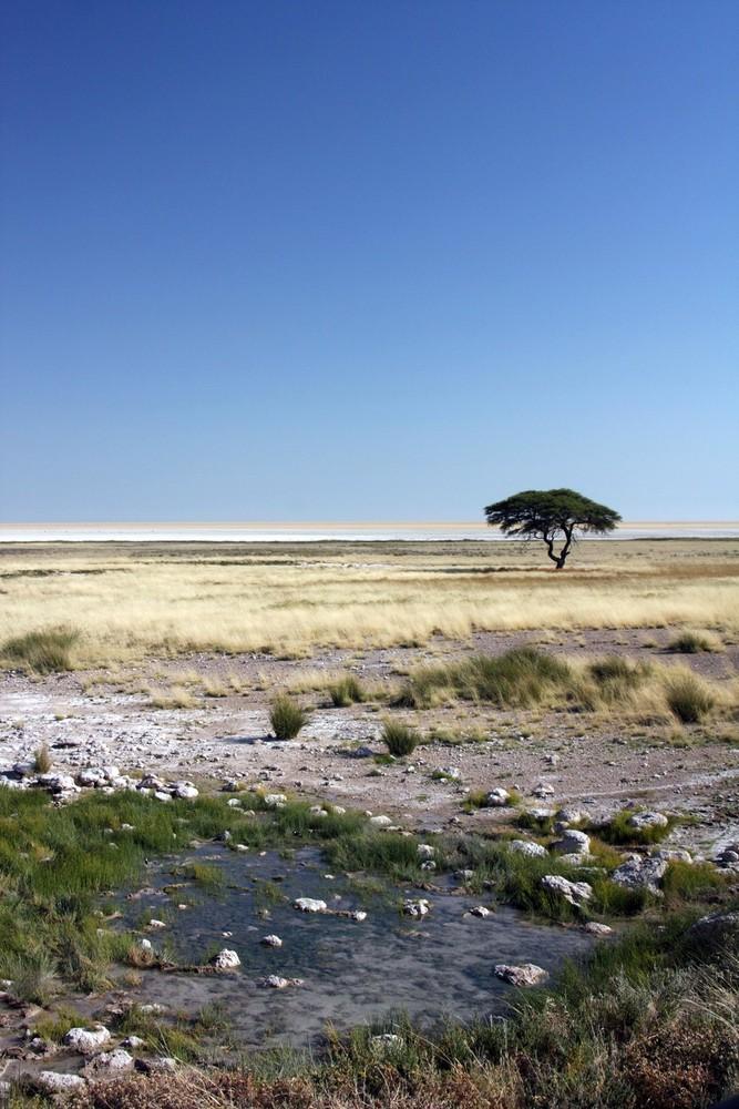 In der Etosha-Pfanne (Namibia)