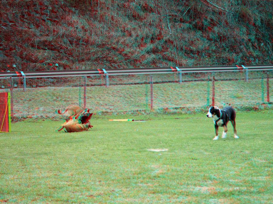 In der Hundeschule (3D rot/cyan)