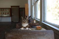 In der katzenschule