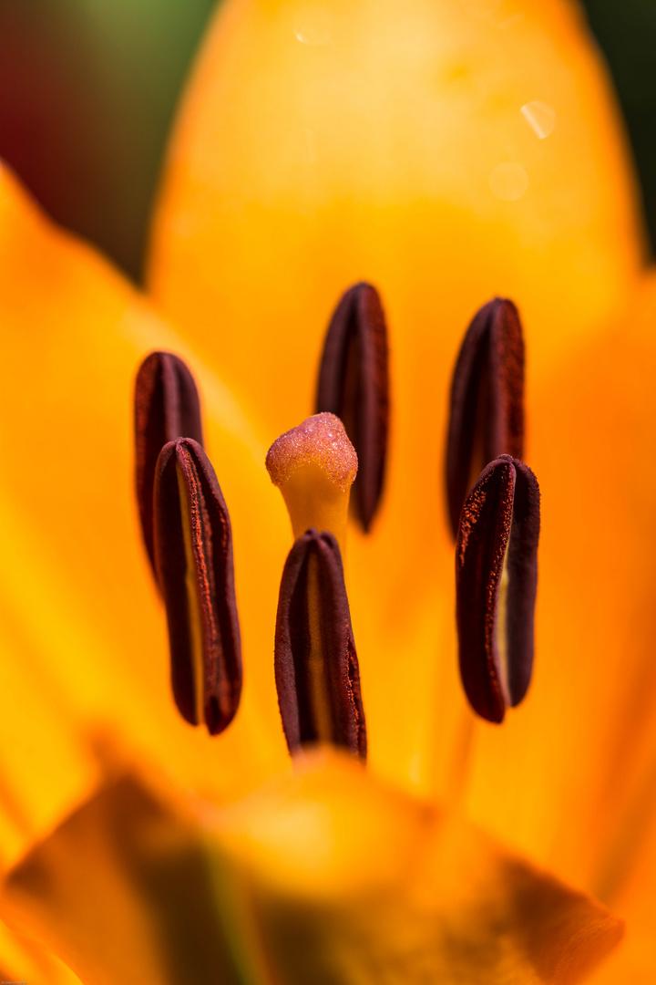 In der Lilie