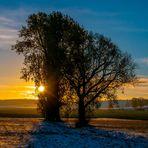 In der Morgensonne