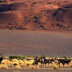 in der Namib