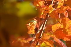 In der Oktobersonne