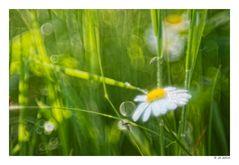 in der Sommerwiese ...
