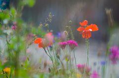 In der Sommerwiese