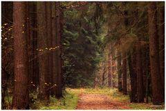 In der Stille des Waldes...