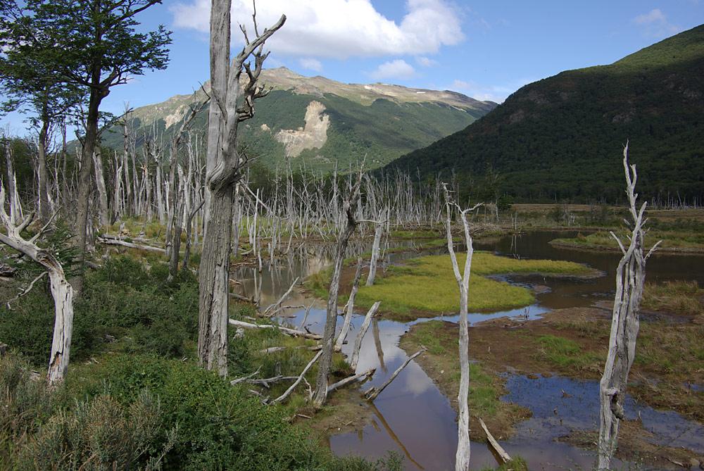 in der Umgebung von Ushuaia