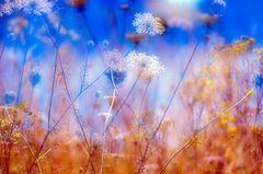 In der Wildblumenwiese