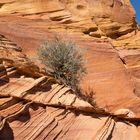 In der Wildnis der Vermilion Cliffs