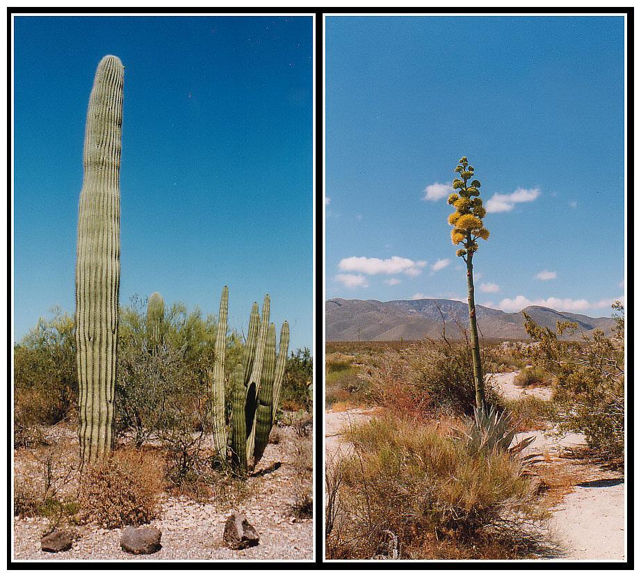 In der Wüste Arizonas