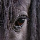 ... in die Seele blicken