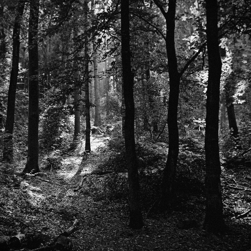 In die Wälder