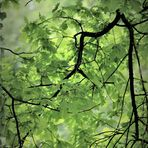 in die Zweige geschaut ,