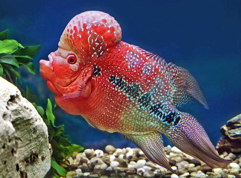 In diesem Aquarium bin ich der Kaiser!