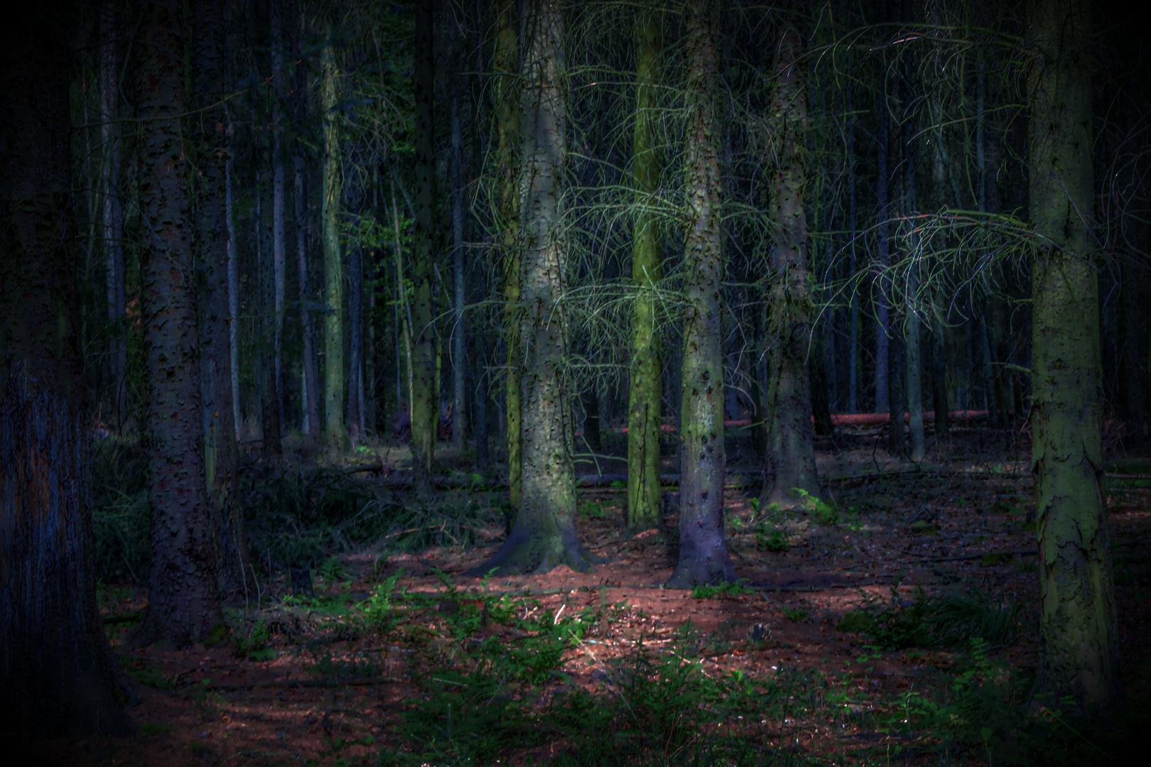 In einem dunklen, dunklen Wald ...