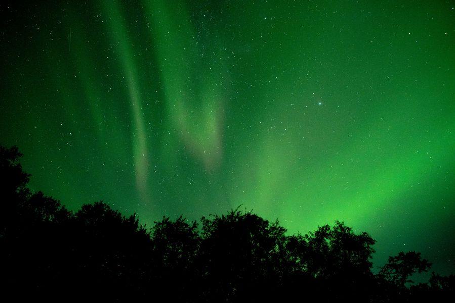 in einem Wald auf Island Ende August