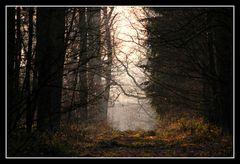 In einem Wald bei Herbern